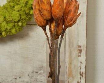 Protea Repens | Sugar Brush Protea | Honey Flower | Dried Protea Flower