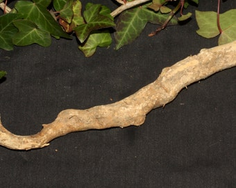 English Boxwood Wand ROOT - dreams - Pagan, Wicca, Witchcraft, magical wand