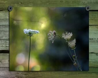 Nature Art, Green, Botanical Photograph, Woodland Plants, Surreal, Fields, Meadow, Zen, Wildflower Decor, Flowers - Distant Light