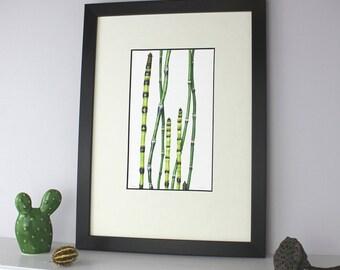 Ornamental Grass Illustration-Art for living room-Print for office- Gift for gardener-Gift for man-Botanical Illustration-Limited edition