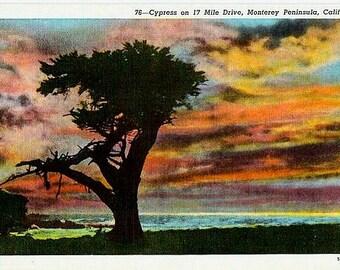 Vintage California Postcard - A Monterey Cypress at Sunset (Unused)