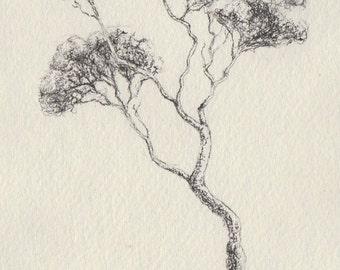 Original pen and ink tree drawing