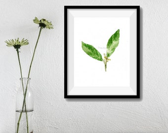 art print Bay Laurel, Bay leaves watercolor print, Botanical herb print, kitchen art, minimalist art, Bay Leaves artwork, shades of green
