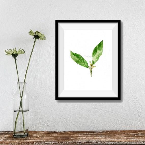 art print Bay Laurel, Bay leaves watercolor print, Botanical herb print, kitchen art, minimalist art, Bay Leaves artwork, shades of green