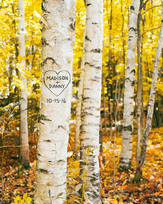 Birch tree art print personalized aspen carved