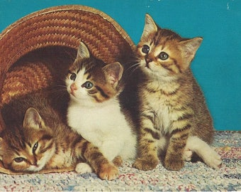 Vintage Alfred Mainzer Three Tabby Cats in Basket Postcard, 1955-1977