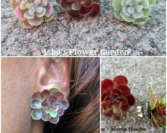 Succulent earrings, Hens and chicks earrings, stud earrings, forest, woodland