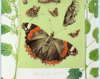 Nettles for Butterflies. Red Admiral Etching.