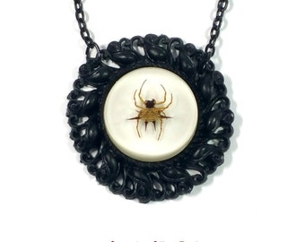 real orb weaver spider specimen taxidermy oddity necklace