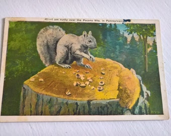 Vintage Nutty Squirrel Postcard --- Retro Cute American Souvenir Mail --- 1940's 1950's Pocono Mountain Wildlife East Coast Style Home Decor