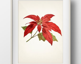 Poinsettia Botanical Print - Holiday Wall Art - WITHOUT plant name on print - FL-30