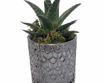 "Metal Lace Planter with Live Succulent Plant - Silver - 3"" x 3"" x 3.5"""