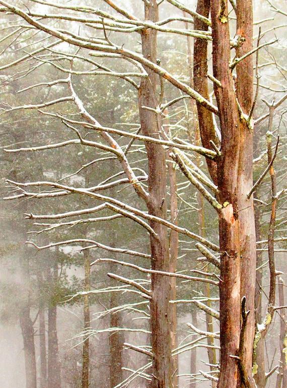 Snowy Trees Wooded Setting 5x7 8x10 11x14