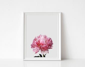 Pink Flower Print, Flower Photo, Botanical Photo, Art Photo, Modern Minimal, Flower Art Photo, Flower Art Print, House Minimal Decor