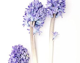 flower photography prints, botanical art, floral bedroom decor, flower nursery wall art, botanical flower print, purple bedroom art girl