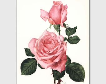 "Rose Print, Romantic Wall Art, Vintage Botanical Illustration, 1960s Flower, Pink Room Decor ""Rendezvous"" No. 29"
