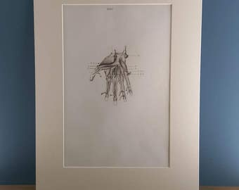 Vintage Medical Anatomical Print of Hand in an Ivory Mount