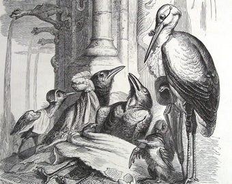 1840 Grandville Caricature Lithograph. Original Antique. Art, Humour. French. France. Frogs. Sheep. Bird. Hippopotamus. Illustration