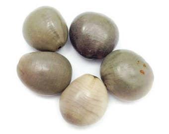Cabalonga, gray, 20mm, 5 pieces, seeds beads, bead