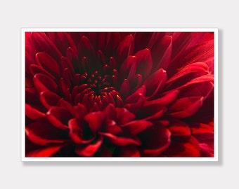Chrysanthemum Photo Print, Flower Photo Print, Printable, Photo Decor, Modern Photo Art, Instant Digital Download, Photo Download