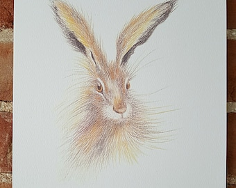 Hare A4 print. Hare sketch. Hare drawing. Norfolk hare. Wildlife art. A4 print of a hare. Original art. Drawing of a hare. Hare painting