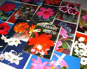 Vintage flower postcard set - Indoor plant postcards - Vintage plant post card - Plant photography prints - Unused flower post card set