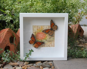 Real Monarch butterfly duo - insect taxidermy art