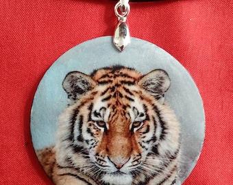 Siberian Tiger (photos)