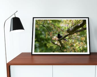 Black Phoebe Photography Print (See item description)