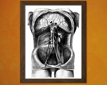 FINE ART REPRODUCTION Anatomy Poster  Medical  Human Anatomical Vintage Retro    Organs Bones Medicine