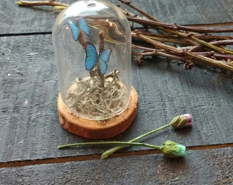 Miniature Butterfly Specimen Dome
