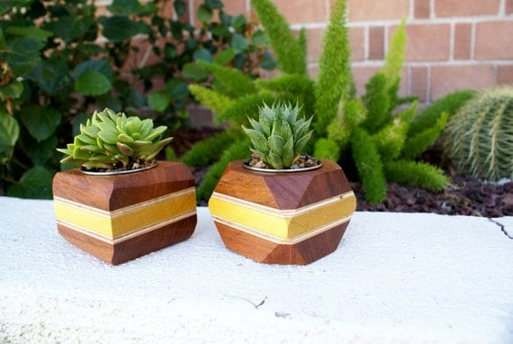 Modern Wood Walnut Geometric Succulent Planter