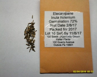 100 Organically Grown Elecampane Seeds