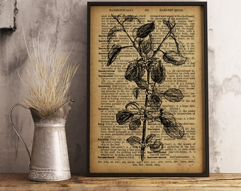 Floral Botanical Vintage Print, Common Buckthorn Dictionary Art Print, Botanical Art Decor, Flowers Illustration, Botanical Wall Art (F12)