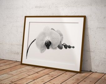 Black and white flower photography by digital download, printable art photography, flower orchid Orchid digital print download