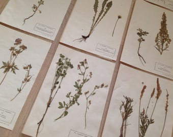 Vintage herbarium set #2