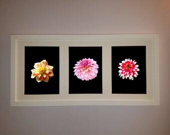 Dahlias, Mums, Zinnias  - Mix and Match Flower Photographs