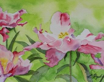 Peonys - study in watercolor