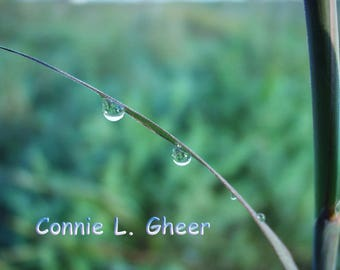 Dew Drops 8x10 Photograph