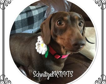 Cute crochet daisy flower. Collar or harness accessories ,for your pampered pet
