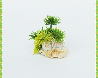 Miniature plants,  miniature garden, planter, seashell, cactus, dollhouse plants, dollhouse, miniatures, miniature dollhouse