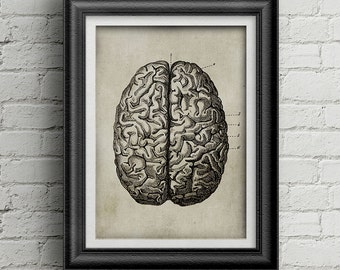 Anatomy brain print 034 - digital poster - antique brain print - old drawing - retro brain poster - old brain - brain illustration