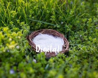 Newborn Digital Backdrop Background Nature Nest
