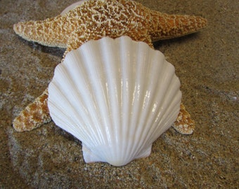 Large White Seashell Hair Barrette-Mermaid Hair, Wedding Accessories, Mermaid Barrette