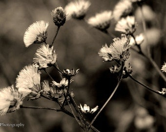 Flower Nature Photography | Sepia Prints | # 2 of 5