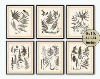 Vintage fern print, Vintage botanical print, Antique fern illustration, Printable print, Wall art ferns, Instant download, 8x10, 11x14, JPG
