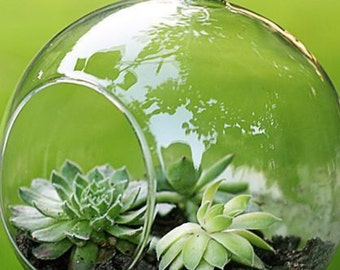"""Succulent terrarium with moss and 4"""" glass. Moss rocks. Only ships within USA"""