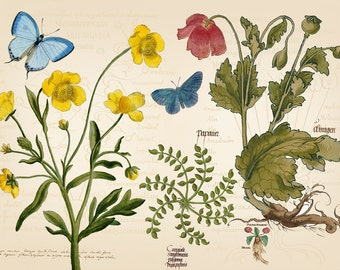 Botanical printable, garden art, butterfly print, antique botanical prints, flower art print, vintage botanical print, botanical poster