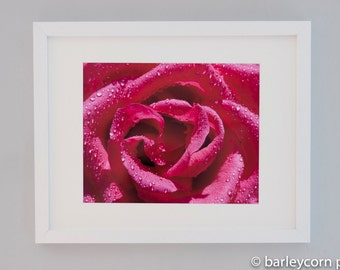 Rose- Original Colour Photographic Print- FREE POSTAGE- Flower picture- framed photograph- home decor-gift for her