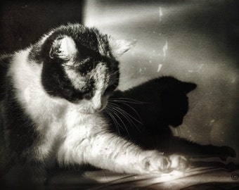 Cat photography, photo printing, fine art photo, cat art, black and white, fantasy art, shadow art, gift